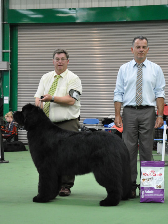 Reserve Best In Show - Ch., Ir. Ch. Fairweathers's Knockout with Brooklynbear