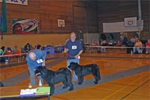 Picture of Dogs waiting to receive awards NNC Open Show 2005