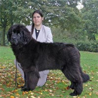 picture of newfoundland dog Mayoss You Two
