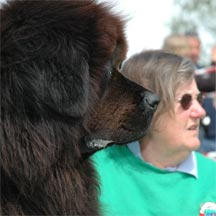 picture of brown Newfoundland dog and Judith Stonestreet