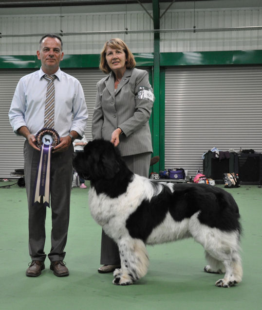 Best Landseer In Show - Willowbears Eagle Eyes Millthorpe