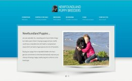 Newfoundland Puppies web site screen