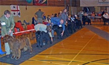 Picture of Class at NNC Open Show 2005
