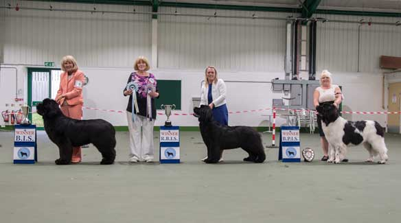 Open Show Winners
