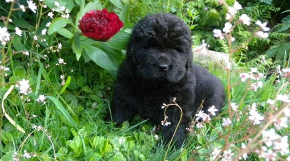 Puppy in a flower bed