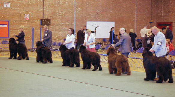 Limit Dog class